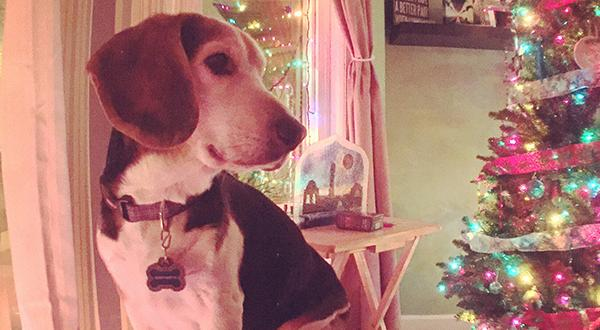 Dog training tips: Keep your dog away from the holiday tree