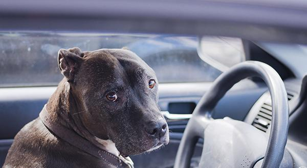 Dog left in vehicle with window rolled down