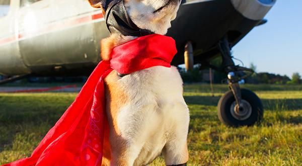 Dog next to plane wearing cape
