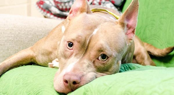 Evacuated dog, homeless shelter pup waiting to be adopted