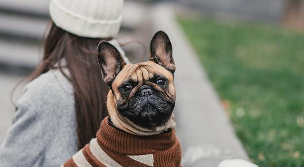 Dress Up Your Pet Day: Celebrating Our Four-Legged Friends In Style | Figo Pet Insurance