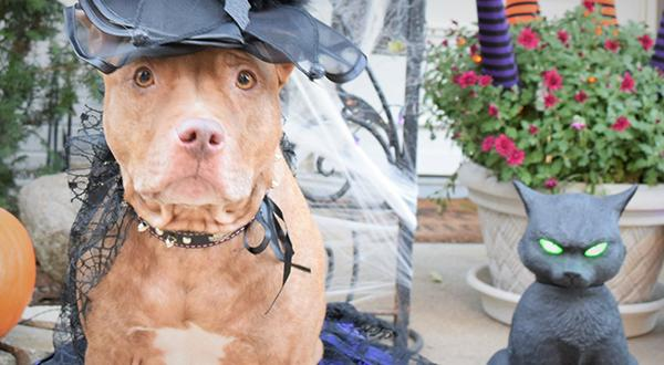 Halloween pet safety: Dog in costume