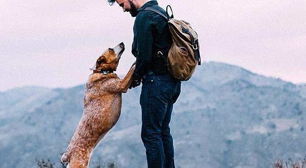 Man and dog hiking in the mountains