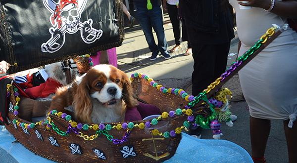 Parade featuring a dog in New Orleans