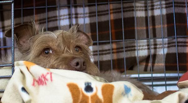 Scared dog in crate waiting to be evacuated