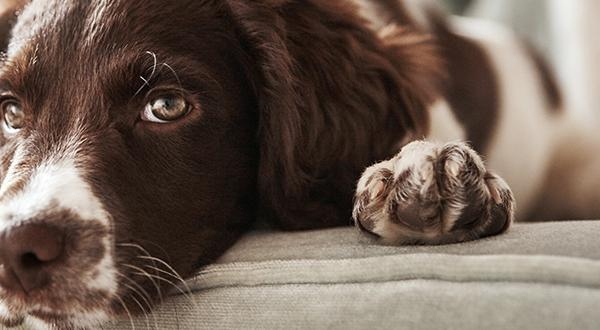 Dog laying down on puppy couch