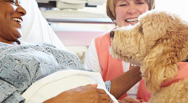 Therapy dog visiting a sick woman in the hospital