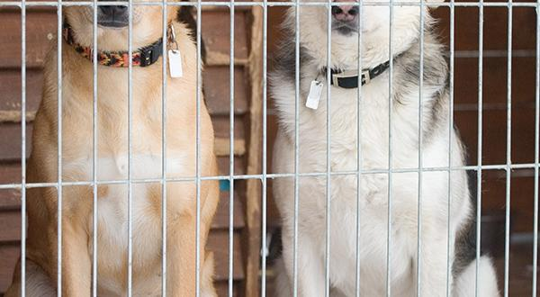 Two dogs in shelter waiting to be adopted