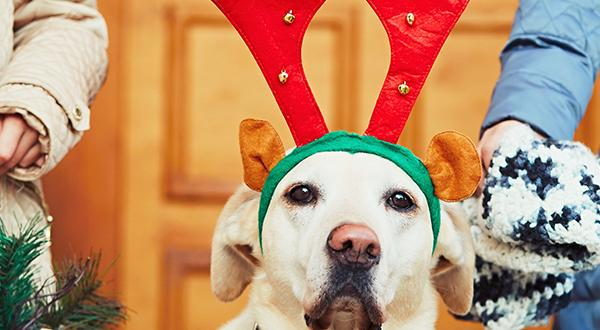 Santa's reindeer and pets need health certificate to travel