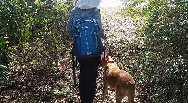Woman with dog hiking through woods