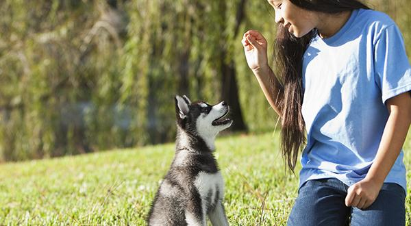 Puppy Training: 5 Basic Commands To Teach Your Dog