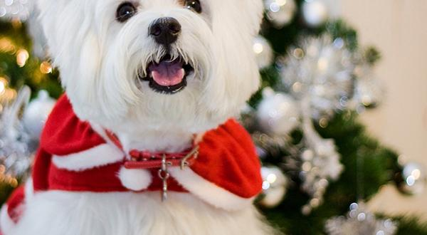 'Tis the season: Treat your pet to the best gifts this holiday season