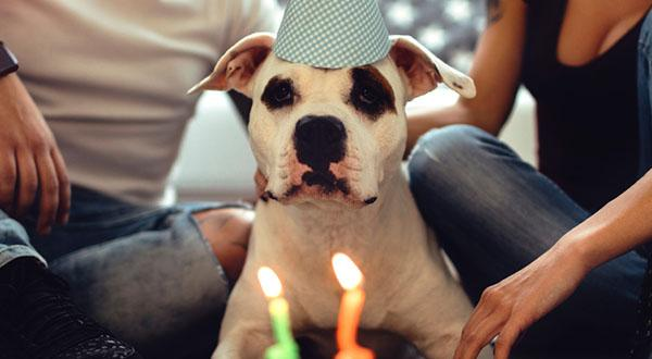 Dog celebrating birthday with cake and birthday hat in between two owners