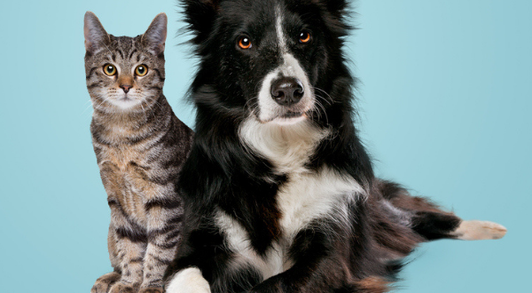 Dog and cat sit side by side on blue background