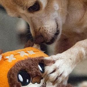 small dog playing with toy