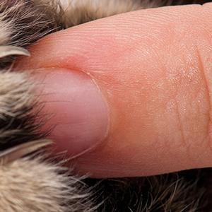 protracting cat claws for trimming