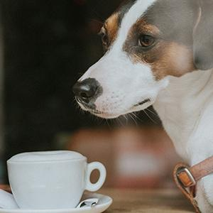Dog in coffee shop with owner