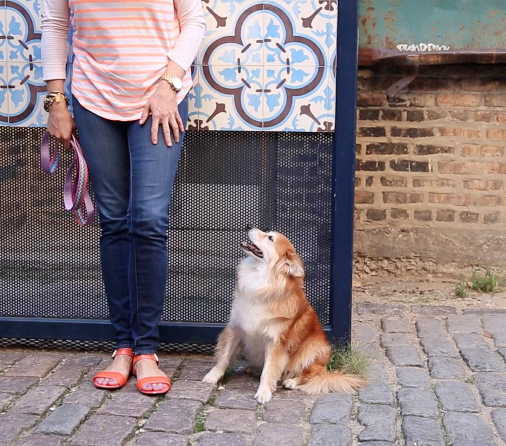 Small dog staring up at owner leaning against wall
